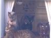 Bailey Cats